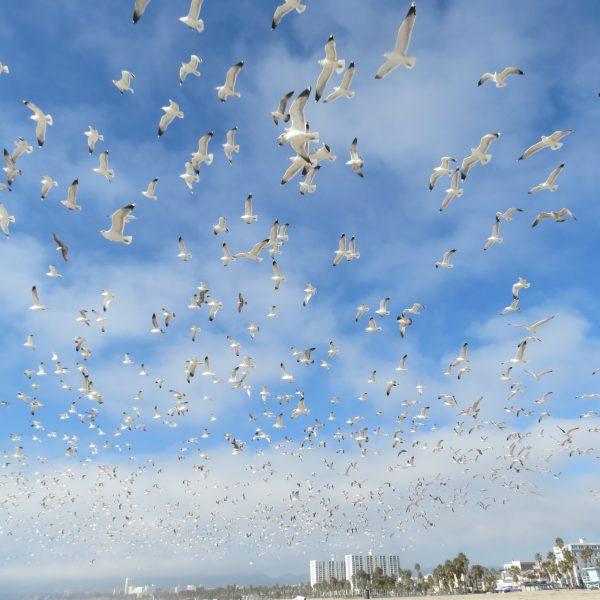 birds flight 1