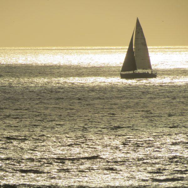 sailboat bw