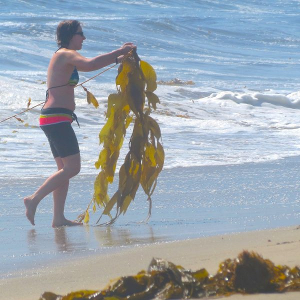 seaweed gal
