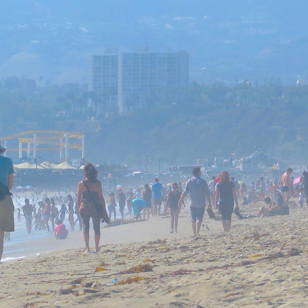 sunday swarms