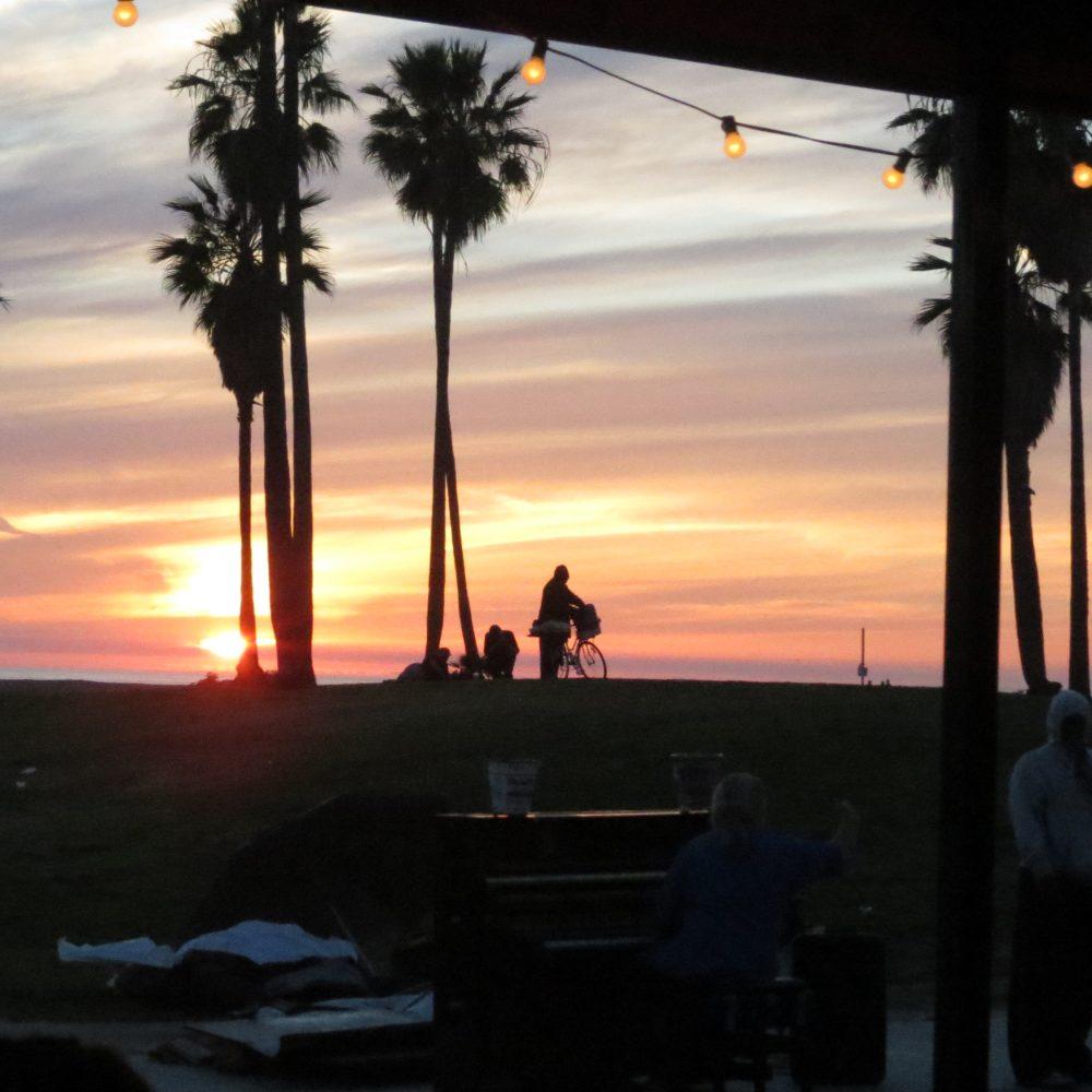 sunset palm 1